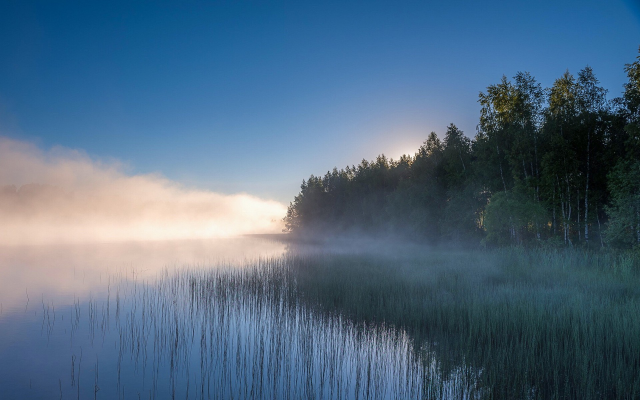 1920x1200 pix. Wallpaper landscape, nature, lake, mist, sunrise, forest, water, reeds, trees, Russia