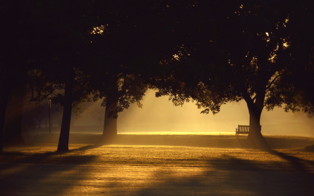2560x1600 pix. Wallpaper trees, sunlight, mist, photography, benches, sunset