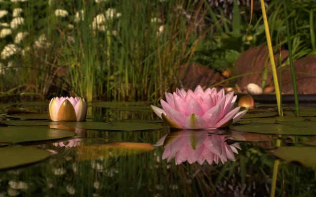 1920x1200 pix. Wallpaper water lilly, reflections, water, pond, flowers, nature