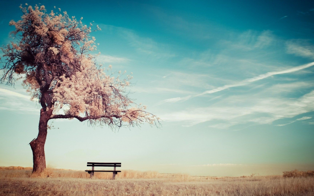 1920x1080 pix. Wallpaper alone, trees, benches, sky, ground
