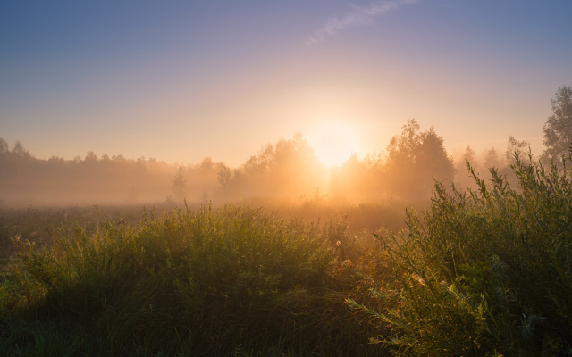 1920x1240 pix. Wallpaper summer, meadow, dawn, fog, sun, honey dew, nature