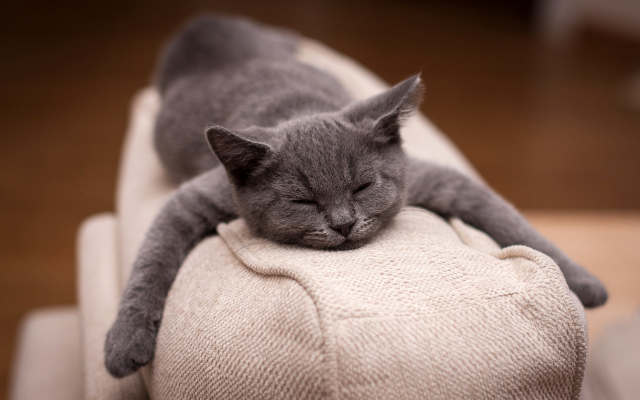 1920x1200 pix. Wallpaper cat, animals, sleep