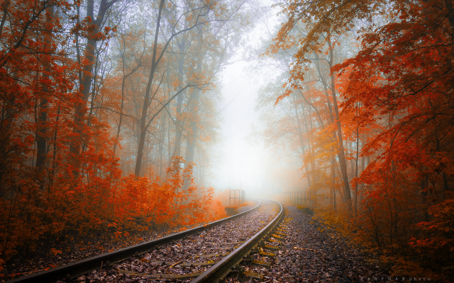2000x1333 pix. Wallpaper autumn, railway, tree, fog, haze, leaves, autumn colors, nature