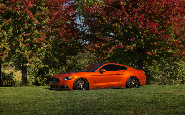 6016x4016 pix. Wallpaper ford mustang, nature, cars, orange cars, ford, ford mustang gt lowered