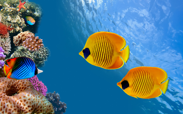 6040x3371 pix. Wallpaper costa rica, tropical fish, fish, underwater, coral reef, animals