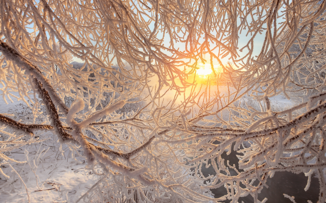 2000x1335 pix. Wallpaper nature, branches, snow, winter, sun, frost