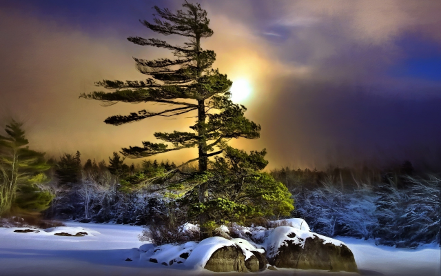 1920x1200 pix. Wallpaper winter, night, tree, snow, overcast, nature
