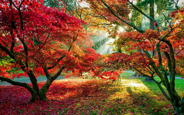 1920x1080 pix. Wallpaper trees, forest, sun rays, fall, leaves, red leaves