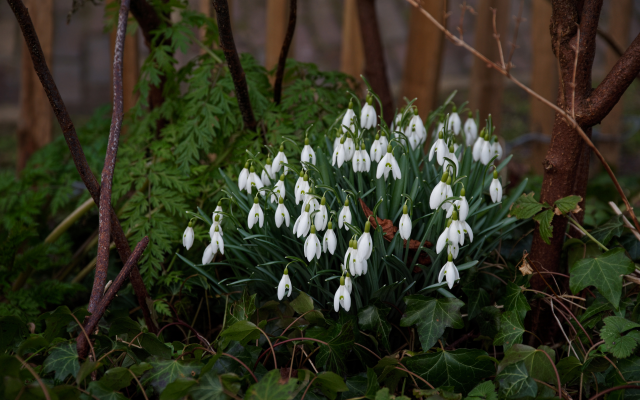 3000x2002 pix. Wallpaper snowdrops, spring, flowers, nature