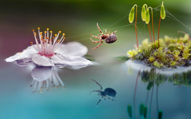 1920x1390 pix. Wallpaper macro, nature, moss, sprouts, flower, spider, reflection, animals, insects