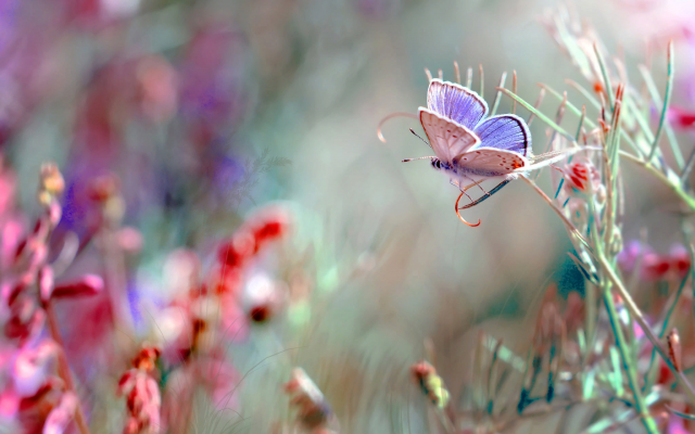 2048x1366 pix. Wallpaper nature, grass, butterfly, macro, insects, nature
