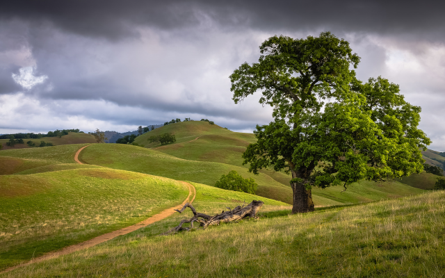 2048x1320 pix. Wallpaper nature, landscape, hills, tree, clouds, path, oak