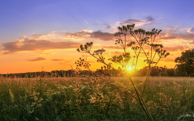 2048x1152 pix. Wallpaper nature, field, grass, sunset, wildflowers