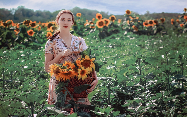 2560x1707 pix. Wallpaper summer, field, sunflowers, girl, women