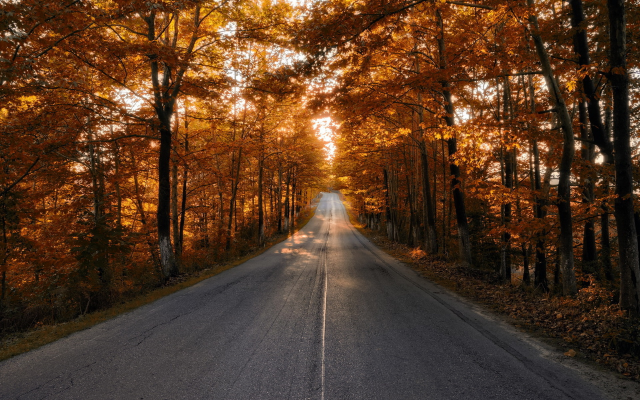1920x1243 pix. Wallpaper road, autumn, trees, leaf, nature