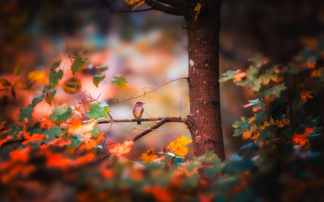 2048x1368 pix. Wallpaper nature, autumn, tree, branches, leaves, bird
