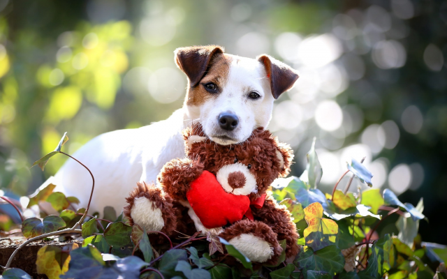 2048x1365 pix. Wallpaper animals, dog, puppy, toy, leaves, tessy bear