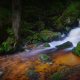 nature, landscape, moss, ferns, forest, waterfall, creeks, shrubs wallpaper