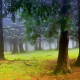 nature, trees, forest, leaves, branch, mist, moss wallpaper