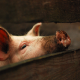 animals, pigs, nose wallpaper