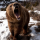 bears, animals, nature, teeth, snow, roar wallpaper