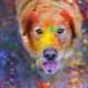 dog, animals, colorful, dust, Labrador, Retriever, tongue wallpaper