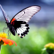 butterfly, insect, animals, nature, wings, flowers, closeup, macro wallpaper