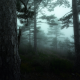 morning, dark, trees, nature, landscape, mist, sunrise, forest, hill, atmosphere wallpaper