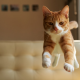 cat, animals, jumping, kitten wallpaper