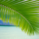 palm tree, palm, tropics, sea, ocean wallpaper