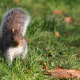 squirrel, animals, nature, grass wallpaper