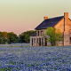 Texas Bluebonnet, Lupinus texensis, flowers, house, tree, nature, house wallpaper