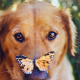 dog, butterfly, eyes, animals wallpaper