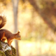 squirrel, treee, animals wallpaper