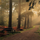 dirty road, sunrise, forest, mist, England, tree, sun rays, landscape, nature,  wallpaper