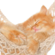 cat, kitten, animals, nature, baby animals, hammock wallpaper