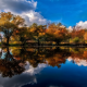 lake, tree, reflections, clouds, water, autumn, nature, landscape wallpaper