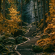 path, stairs, forest, Germany, nature, landscape, tree, autumn wallpaper