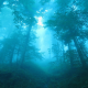 sunrise, fog, forest, switzerland, nature, tree wallpaper