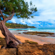 Kauai, Hawaii, island, beach, ocean, tree, sand, peninsulas, landscape, nature wallpaper