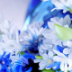 flowers, nature, blue flowers wallpaper