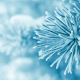 macro, frost, trees, snow, winter, pines wallpaper