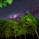 nature, tree, forest, wood, night, Milky Way, stars, clear sky wallpaper