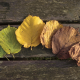 autumn, leaf, leaves, wood, wooden surface wallpaper