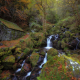 moss, autumn, forest, nature, stream, waterfall, france, house wallpaper