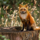 fox, animals, stump, nature wallpaper