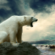 polar bear, animals, bear, clouds, sea wallpaper