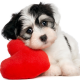 valentines, puppy, animals, dog, pet, baby animals, hearts wallpaper