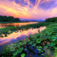 sunset, river, pond, reflections, water, nature, china wallpaper