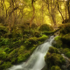 river, forest, moss, nature, stream wallpaper